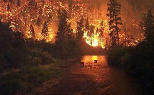 wildfire-floods-destroy-cars